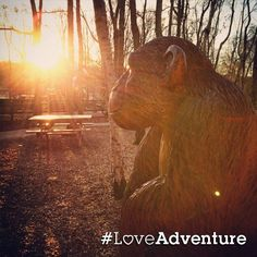 With love from Tilgate Park, Crawley. #LoveAdventure