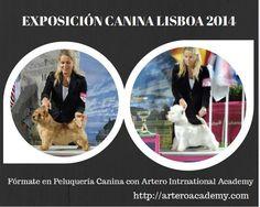 PROFESORADO ARTERO INTERNATIONAL ACADEMY OBTIENE LOS SIGUIENTES PREMIOS EN EXPOSICIÓN BELLEZA CANINA EN LISBOA. Agnieszka, profesora de Artero International Academy Alcorcón, de nuevo en el Podium con los siguientes premios: West Highland White Terrier 2 x CAC, 2 x CACIB, BOB, 3 BOG Best puppy Norwich Terrier: Cac, CACIB, BOB, BOG Fórmate y acredita tus estudios con Artero International Academy 93 515 00 35 – info@arteroacademy.com Centros en varias ciudades de España