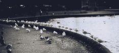 Row of Gulls [OC] [1600 x 711]