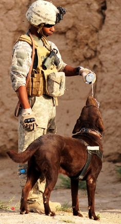 Military Working Dog & Soldier Handler.