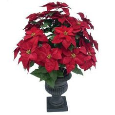 36 in. Red Poinsettia in Pot-TS110035-01 at The Home Depot