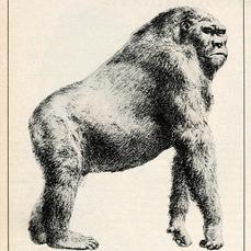 ¿Qué acabó con el primate más gigantesco de la Tierra?