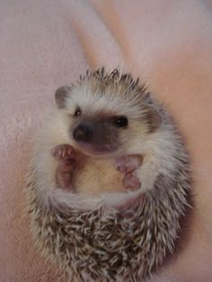 When I retire, I want a pet hedgehog.