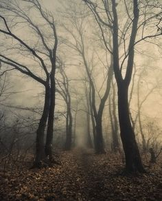In Nature, Vegetal, Tree, Forest. Photography by Dimitri Bogachuk Belle Photo, Mists, Paths, Nature Photography, Landscape Photography, Beautiful Places, Trees Beautiful, Beautiful Pictures, Spooky Woods
