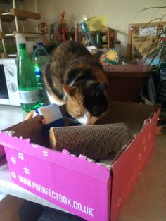 Sushi is enjoying the monthly #purrfectbox