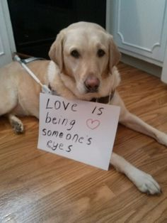 Guide Dog Valentine