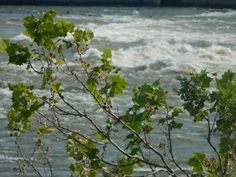 Here are some pictures we took at the falls of the ohio...