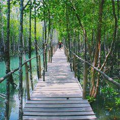 Superb! Bakhawan Eco Park. Kalibo, Akwan, Philippines. Photo by @doctoban