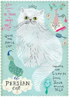 Persian cat from Postallove