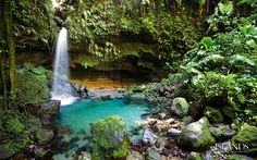 Emerald Falls, Dominica. So pretty. Worth the hike to get to it!