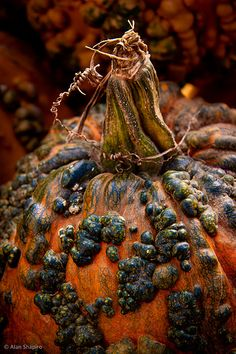 incredible colours and textures. I can never cut up any gourds I buy because they are just too beautiful! Halloween Pumpkins, Fall Halloween, Halloween Decorations, Autumn Witch, October Country, Autumn Scenes, Fall Harvest, Fall Pumpkins, Street Art