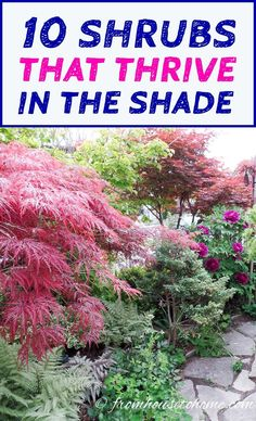 This list of #shrubs is perfect for my shade #garden. I wasn't sure how to fill in the garden bed and now I have a bunch of options. I really like the 4th one. #fromhousetohome #shadegarden #bushes #perennials #gardening