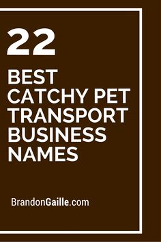 22 Best Catchy Pet Transport Business Names