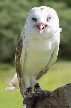What is an owl's favorite subject at school? Owlgebra!  Ha ha, good one, Mama...