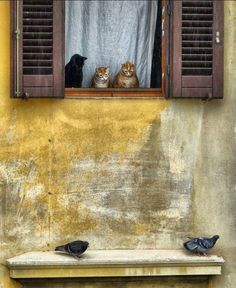 Louvered shutters. Italy. Wonder what those cats are thinking?