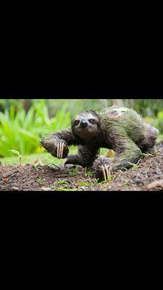 This creepy sloth made me laugh