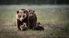 Karhuemo pentuineen