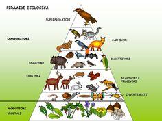 Imagen | Ecosistemas | Pinterest | Pirámide ecológica, Seres vivos y ...