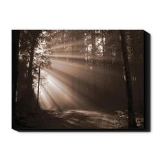 Find it at the Foundary - 24 in. Forest Light I