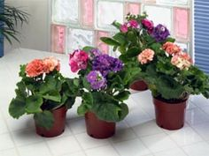 Top 4 Indoor Flower Plants  It's almost Spring again!!!
