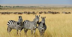 Welcome to Dancing Zebra Safari Co, where we move to the beat of the bush. Book your perfect safari experience today - we know it will change your life.