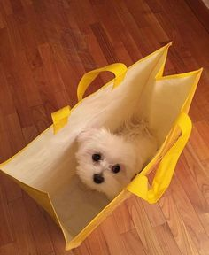 Here comes the cutest present ever in a bag.