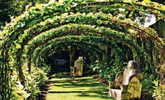 The Vine Walk at Stellenberg Gardens, Cape Town