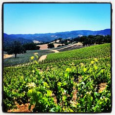 Justin Vineyards -- outside LA--Paso Robles