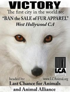 West Hollywood banned fur - this is possible everywhere - keep showing and speaking the truth!