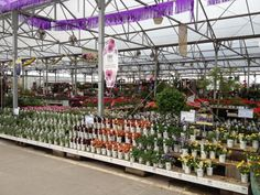 Proven Winners at Calloway's Nursery in North Plano Proven Winners, Flower Nursery, Garden Centre, This Is Us, Display, Flowers, Plants, Shop, Floor Space