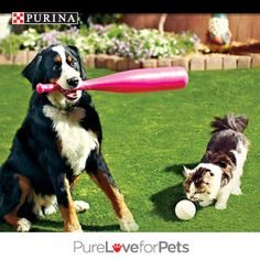 Let spring training commence! Pin your favorite pic of cats or dogs enjoying spring break and you could win FREE Purina® for a Year! Enter today! Go to http://sweeps.piqora.com/PurinaSpringBreak. NO PURCHASE NECESSARY. Valid in 50 U.S. & D.C. Must be 18+ (19+ in AL & NE; 21+ in MS), & own a cat or dog or both. Ends 3:00 p.m. ET on 4/29/14. Void where prohibited. See Official Rules at http://sweeps.piqora.com/PurinaSpringBreak. #PurinaSweeps