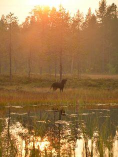 I en skog vid en tjärn i solnedgång. - Fall in Swedish nature - Norrbotten