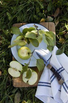 Field guide, Apple Trees...  pic; Apple picnic by; Nicole Franzen