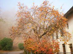 Come quei frutti autunnali Rimasti soli sul ramo, Senza foglie, senza fiori Soli, concreti e senza fronzoli.