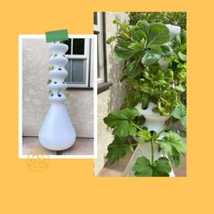 The self-watering, self-fertilizing hydroponic Farmstand makes it possible to grow 200+ varieties of veggies, fruits, and herbs in 5 minutes a week. Successfully grow your own food from home without the experience, time, and space required for traditional gardening. Home Vegetable Garden, Fruit Garden, Garden Planters, Succulents Garden, Balcony Garden, Hydroponic Gardening, Hydroponics, Container Gardening, Hydroponic Lettuce