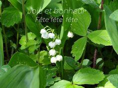 Plants, Joy, Bonheur, Planters, Plant, Planting