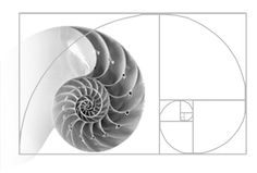 Golden ratio, Golden spiral, Fibonacci sequence and nature all together Fractal Geometry, Sacred Geometry, Fibbonacci Sequence, Golden Ratio In Nature, Spirals In Nature, The Golden Mean, Divine Proportion, Unique Architecture, Geometry Architecture