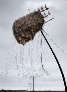 Obie Oberholzer. A Social-Weaver bird nest hangs on a telephone pole on road R361 between Vanwyksvlei and Kenhardt.