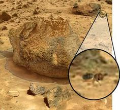 Ok, that is a Bee!, Alien Life On Mars | Life on Mars, Alien on Mars, And Other Mars Mysteries, Maybe?-Top ...