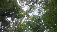 trees #tree #photography #caumerbeek #park #heerlen #netherlands