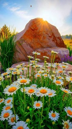 Welcome to the community of fans Pictures nature Beautiful World, Beautiful Gardens, Beautiful Flowers, Flowers Nature, Wild Flowers, Blue Flowers, Nature Pictures, Beautiful Pictures, Landscape Photography