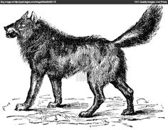 http://image.yaymicro.com/rz_1210x1210/0/810/eurasian-wolf-or-canis-lupus-lupus-vintage-engraving-810402.jpg