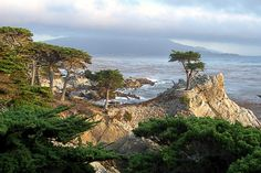 Pebble Beach, The Lone Cypress Tree. One of the most beautiful coastal areas in California and Planet Earth. Places In California, California Dreamin', Monterey California, Beautiful World, Beautiful Places, Monterey Cypress, Monterey Peninsula, Pebble Beach, Big Sur