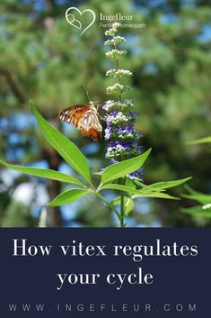 The praises of this herb have been sung in many a fertility community. The question is: how does Vitex regulate your cycles exactly? Hormone Balancing, Disappointed, Fertility, Lost, Herbs, Community, This Or That Questions, Natural, Healthy