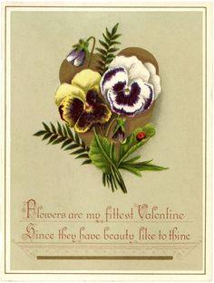 Free Valentine Pansies Image! - The Graphics Fairy