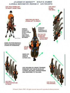 The most important role of equestrian clothing is for security Although horses can be trained they can be unforeseeable when provoked. Riders are susceptible while riding and handling horses, espec… Horse Riding Tips, Horse Tips, Trail Riding, Horse Exercises, Horse Anatomy, Horse Facts, Riding Lessons, Dressage Horses, Horse Training