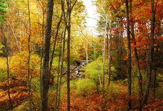 Travelers' Best New England Fall Foliage Photos