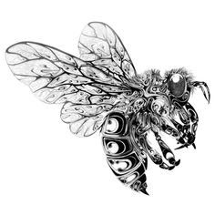 Si Scott Wasp Airborne Drawing Insects