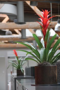 Bromeliads in warehouse office space