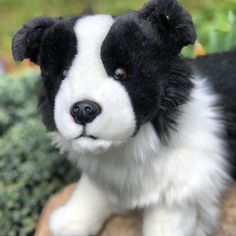 20 Inch Standing Pose Hunter is Best in Show #bordercollie #dogs #plush #stuffedanimal #toys German Shepherd Puppies, Australian Shepherd, Wolf Name, White Border Collie, Arctic Wolf, Standing Poses, Reborn Baby Dolls, Dogs And Puppies, Corgi